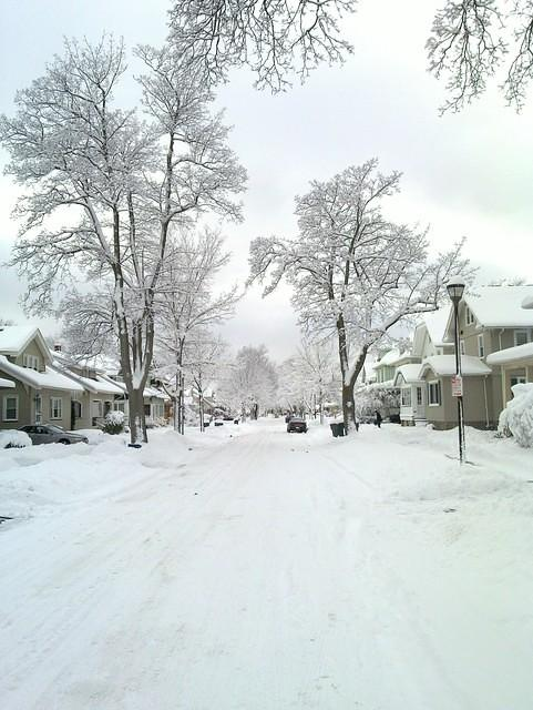 Street with snowy trees